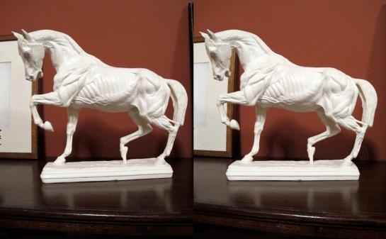Écorché Horse