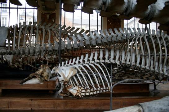 Museum of Comparative Anatomy, Paris