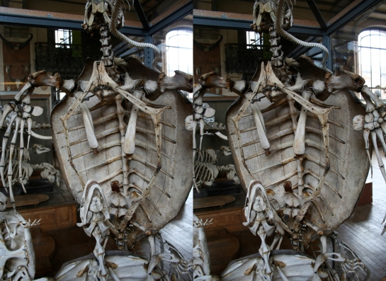 Museum of Comparative Anatomy