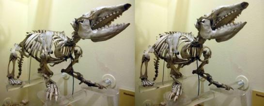 Armadillo Skeleton