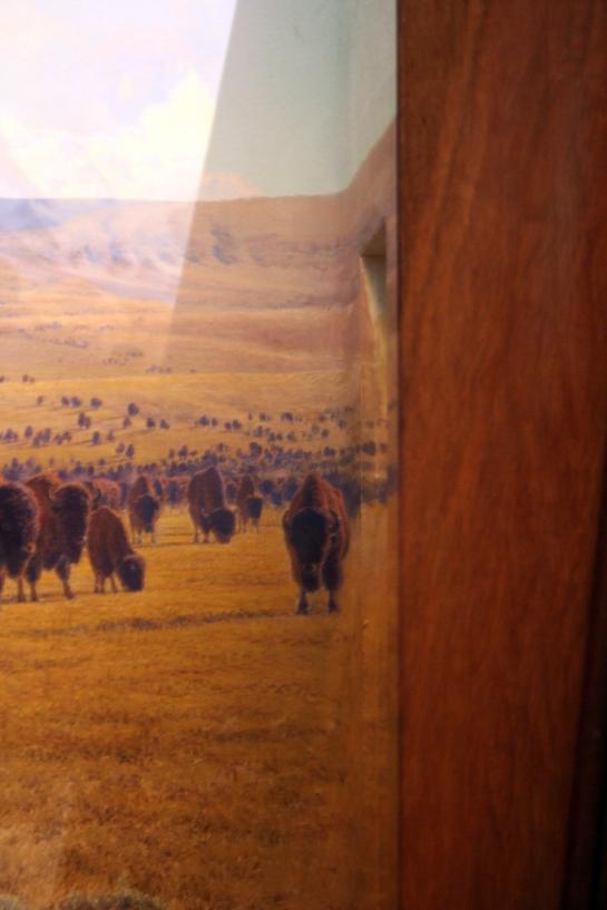 Buffalo Diorama