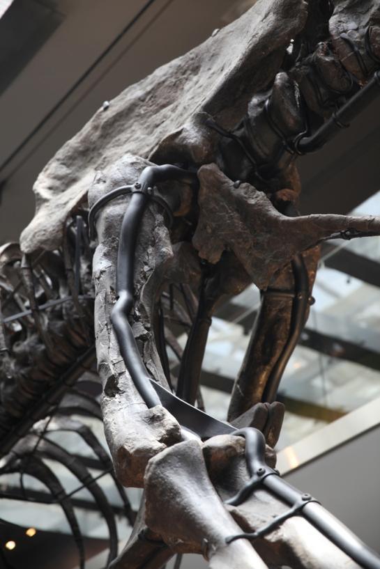 L.A. Natural History Museum