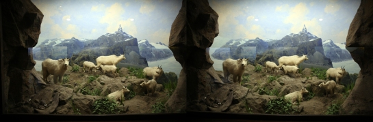 Mountain Goat, L.A. Natural History Museum