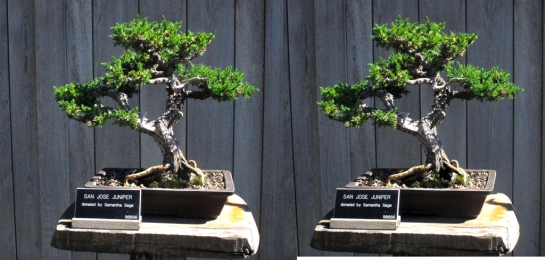 Bonsai Trees at the Huntingdon