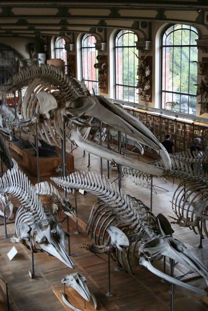 Museum Of Comparative Anatomy Paris Nat Chard